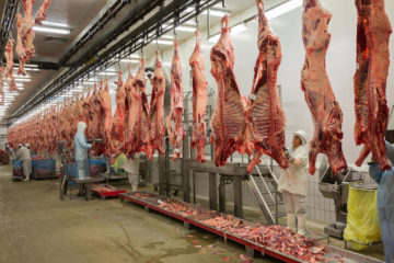 slaughtered meat hanging