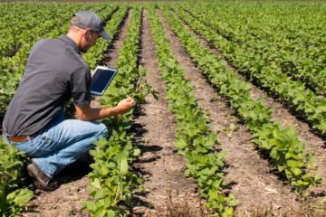 farmer looking at crops holding a tablet device