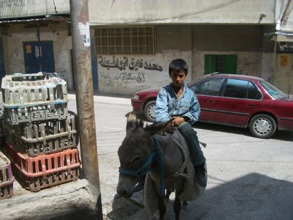 palestinian boy on a donkey in a street